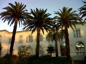 Esemplari di palme nei pressi del litorale di Frejus, sud della Francia